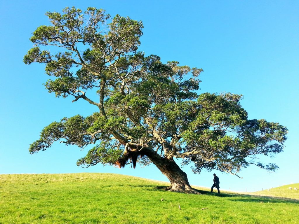 What is an arborist? Why might you need one?