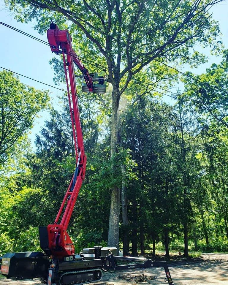 tree trimming berkeley CA