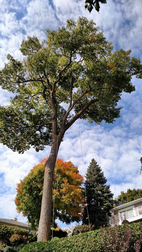 Guidelines For Hiring An Arborist