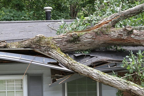 What to do if a tree damages your property?