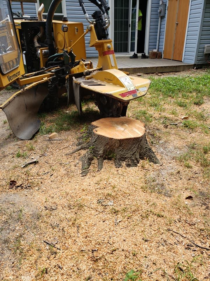 Stump Removal Service in Berkley California