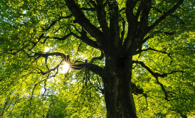 Benefits Of Tree You Probably Didn't Know