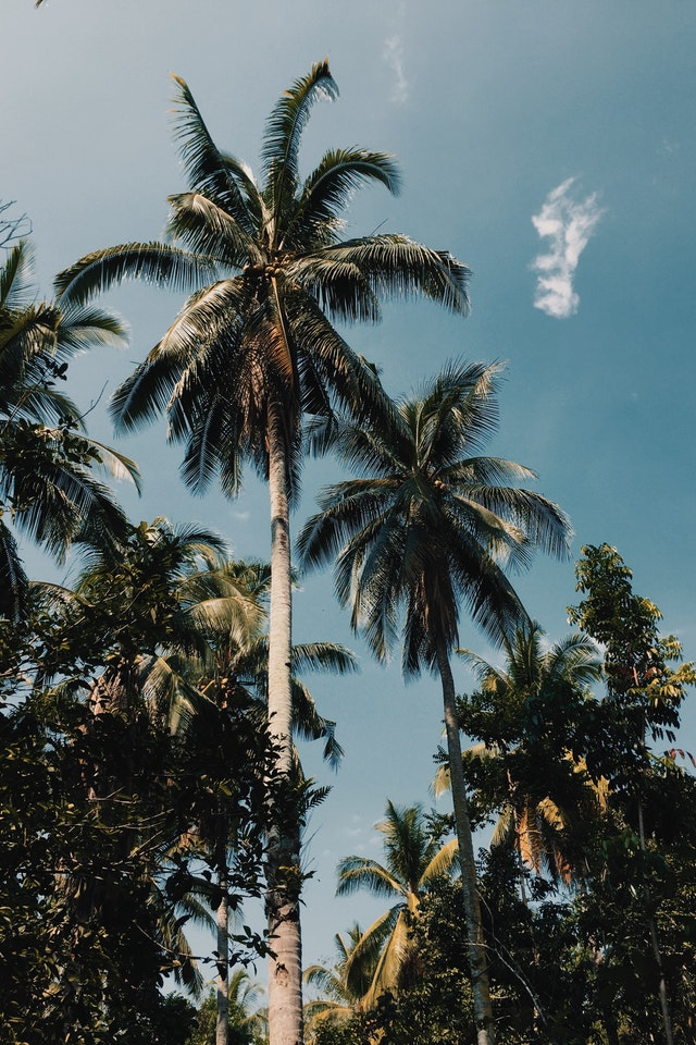 Palm Tree Service