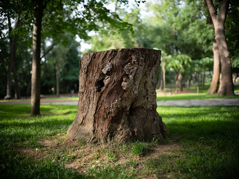 How much does tree stump removal cost? - Stump Removal – Cost guide – Remove annoying stumps in your property!