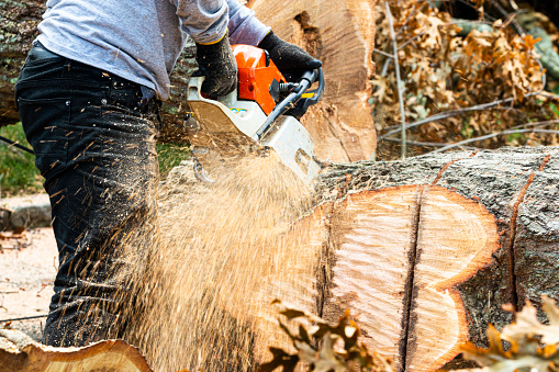 How to remove a tree stump?